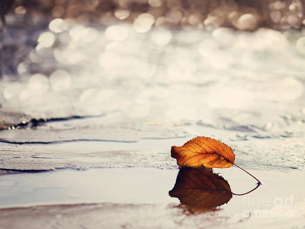 Autumn Leaves Photograph - Autumn by Diana Kraleva