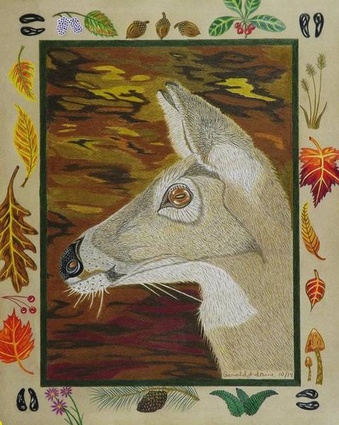 Whitetail Drawing - Autumn Doe   by Gerald Strine
