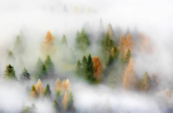 Foggy Photograph - Autumn Dream by Kristjan Rems