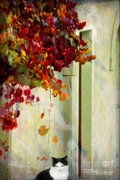 Photograph - Autumn Dreaming ... by Chris Armytage