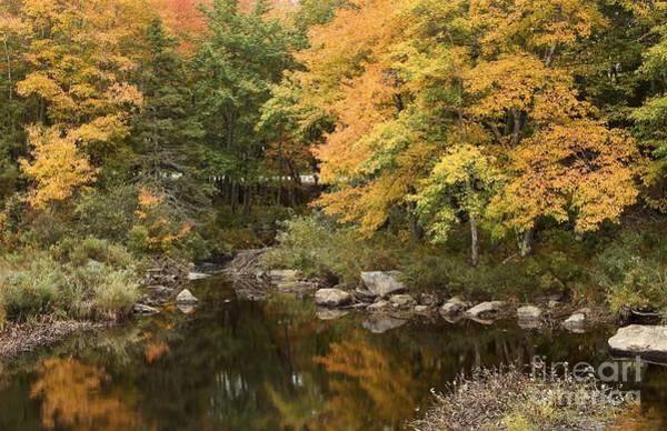 Photograph - Autumn Dreaming by Karin Pinkham