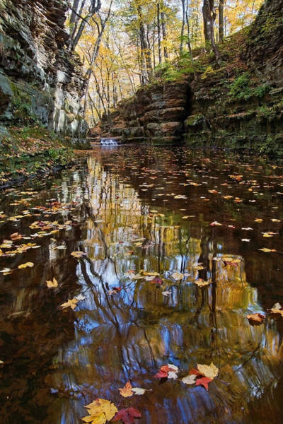 Photograph - Autumn Drifting By by Theo OConnor
