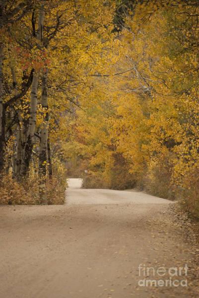 Wall Art - Photograph - Autumn Drive by Juli Scalzi
