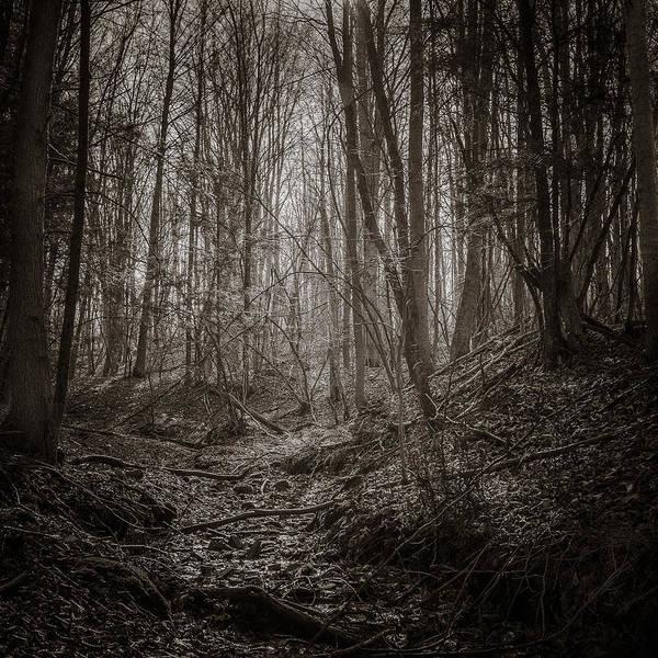 Photograph - Autumn Dry Creek Bw by Chris Bordeleau