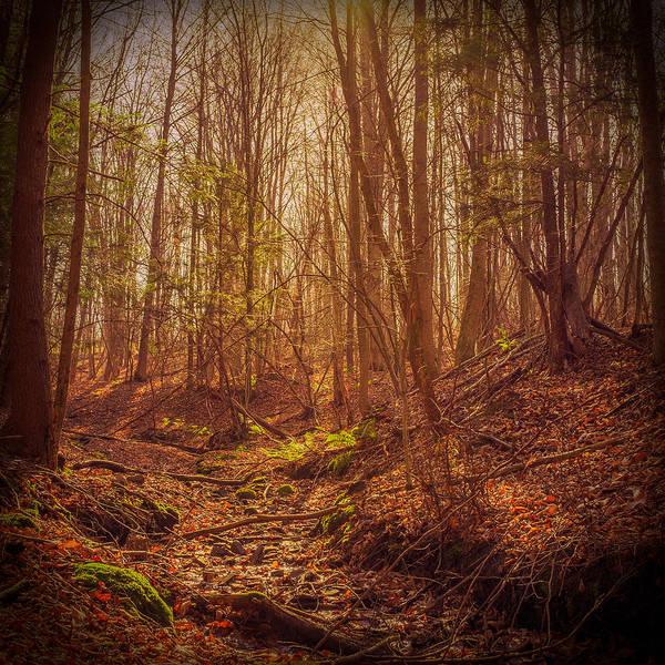 Photograph - Autumn Dry Creek by Chris Bordeleau