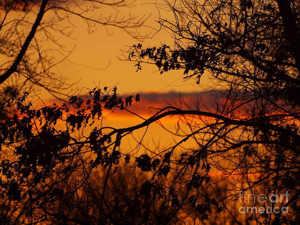 Wall Art - Photograph - Autumn Dusk by Frank Piercy