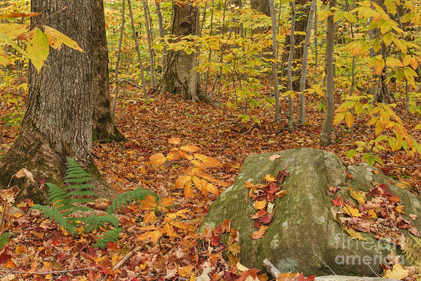 Photograph - Autumn Elements by Charles Kozierok