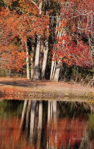 Seasonal Wall Art - Photograph - Autumn Essence by Suzanne Gaff