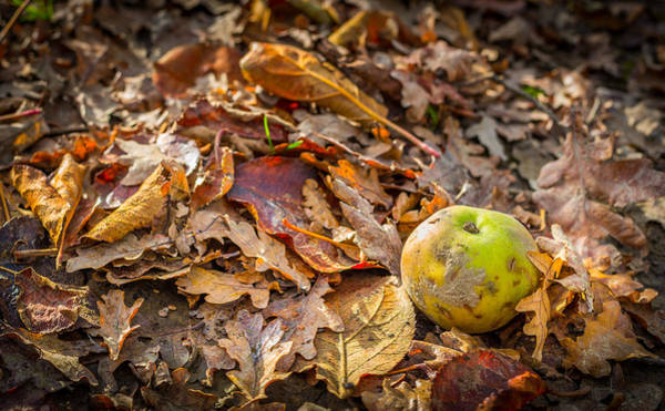 Photograph - Autumn Fall by Gary Gillette