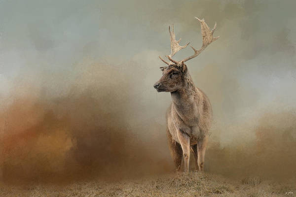 Dama Dama Photograph - Autumn Fallow Buck by Jai Johnson