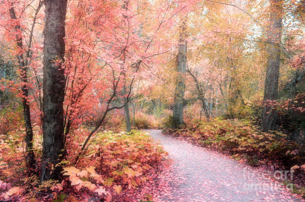 Photograph - Autumn Fantasy by Tara Turner