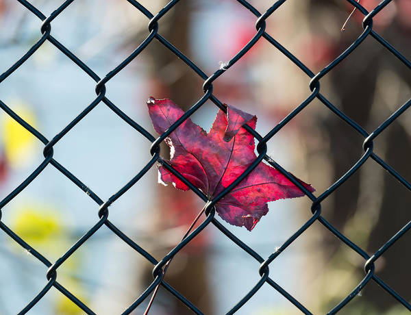 Photograph - Autumn Fence by Patrick Wolf
