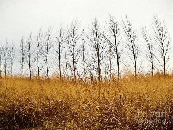Photograph - Autumn Fields Of Tall Grass/ Digital Painting by Sandra Cunningham