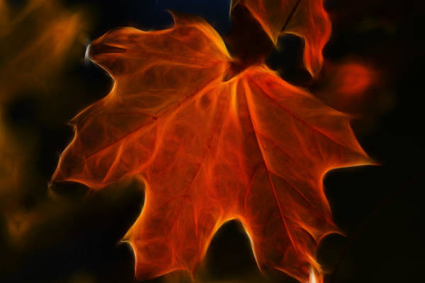 Photograph - Autumn Fire by Beth Sawickie