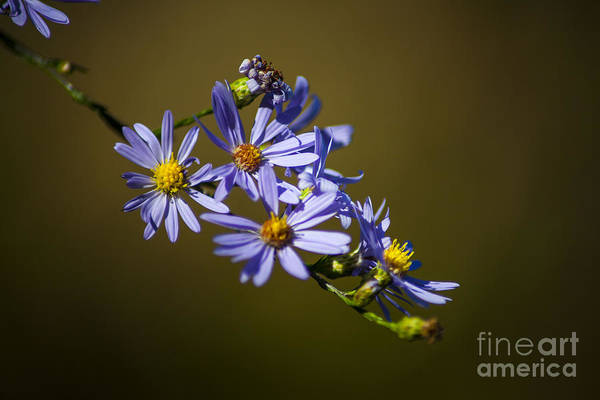 Natural Light Photograph - Autumn Floral by Wayne Moran
