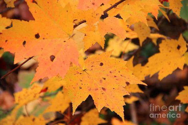 Photograph - Autumn Foliage by Michael Mooney