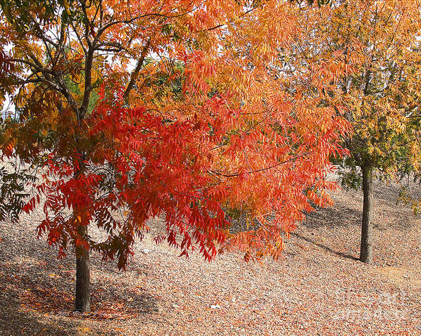 Photograph - Autumn Foliage by Richard J Thompson