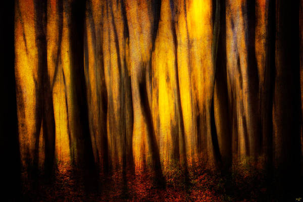 Photograph - Autumn Forest Abstract by Chris Lord