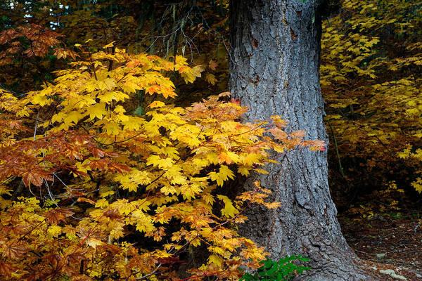Kittitas County Wall Art - Photograph - Autumn Forest - Cooper Lake - Washington - October 2013 by Steve G Bisig