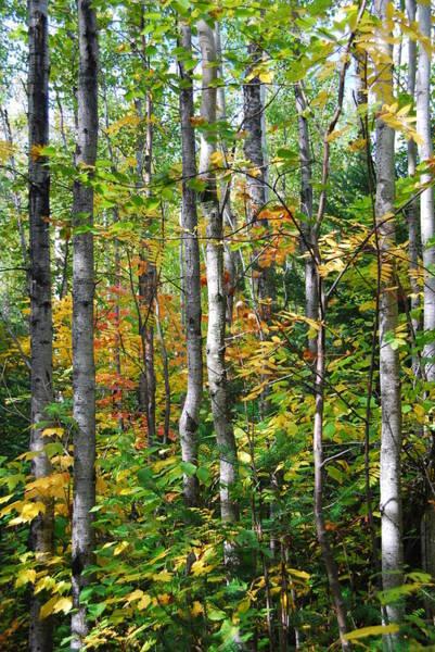 Photograph - Autumn Forest Detail by Cascade Colors