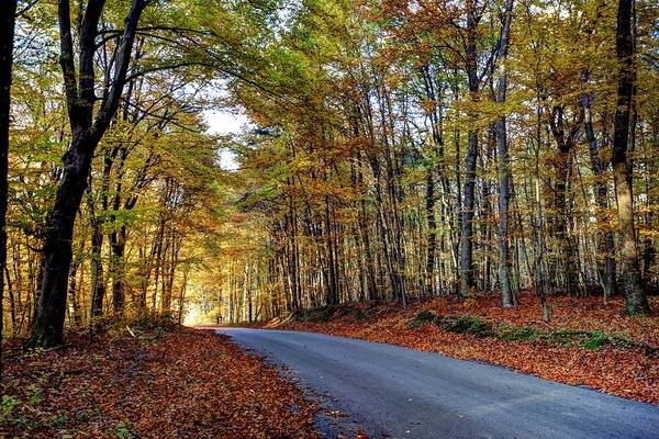 Photograph - Autumn Forest Road by Ivan Slosar