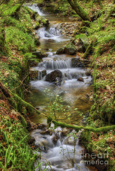 Photograph - Autumn Forest Stream V2 by Ian Mitchell