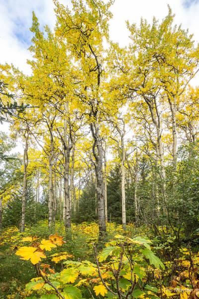 Photograph - Autumn Forest by Tim Newton