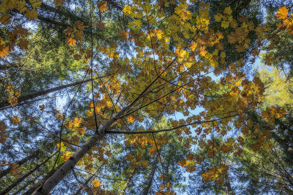 Photograph - Autumn Forest Two by Loree Johnson