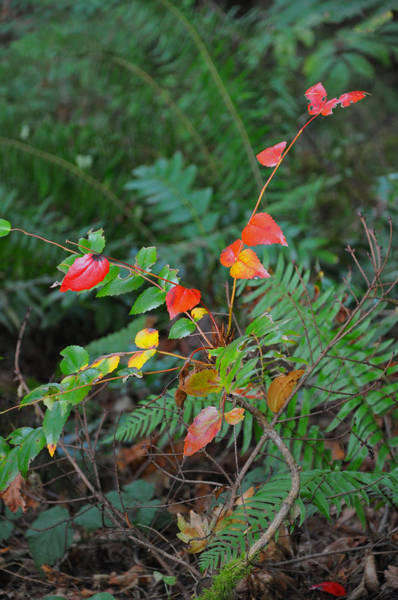 Photograph - Autumn Forest Undergrowth by Kirt Tisdale