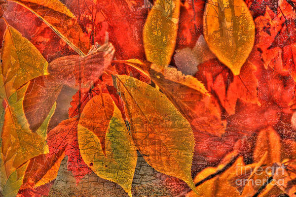 Photograph - Autumn Fusion 4 by Jeff Breiman