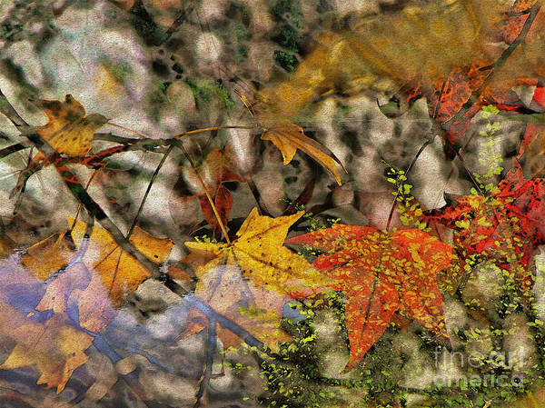 Photograph - Autumn Fusion 7 by Jeff Breiman