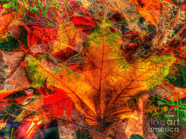 Photograph - Autumn Fusion 8 by Jeff Breiman