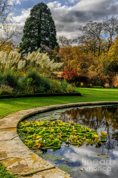 Water Lillies Photograph - Autumn Garden by Adrian Evans