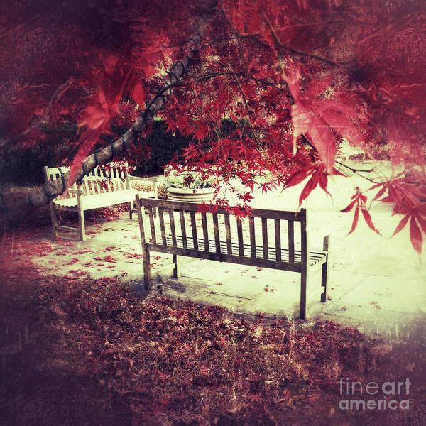 Photograph - Autumn Garden by Chris Scroggins