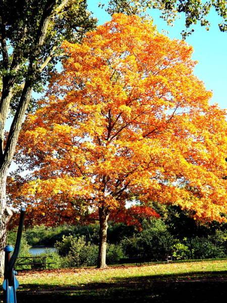 Photograph - Autumn Glory by Darren Robinson