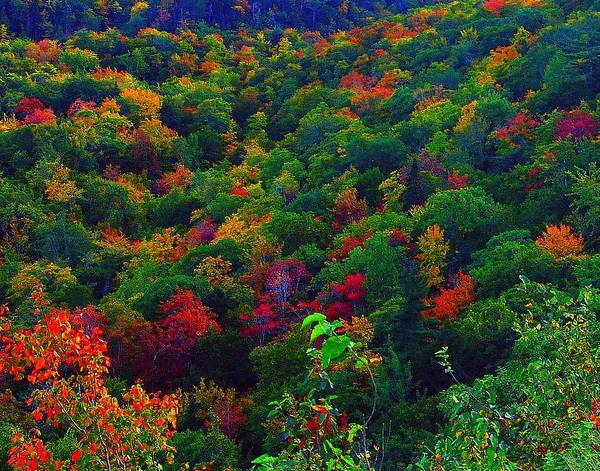 Cabot Trail Photograph - Autumn Glory by George Cousins