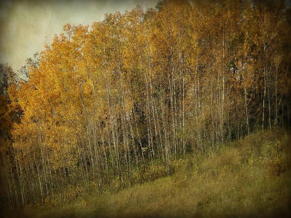 Photograph - Autumn Glory by Lucinda Walter