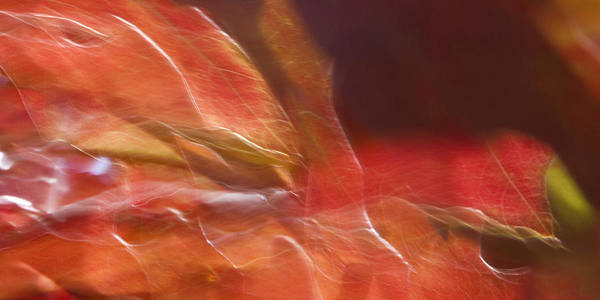 Photograph - Autumn Glory by Margaret Denny