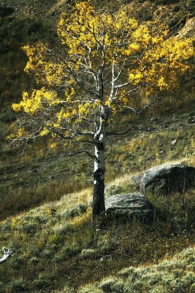 Photograph - Autumn Glow - Yellowstone by Belinda Greb
