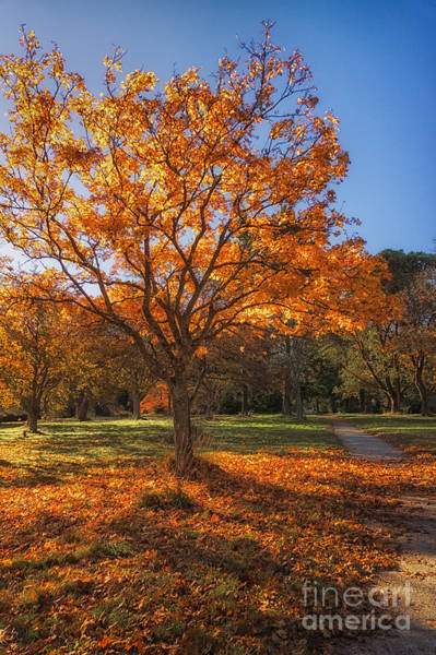 Photograph - Autumn Glow by Carrie Cole