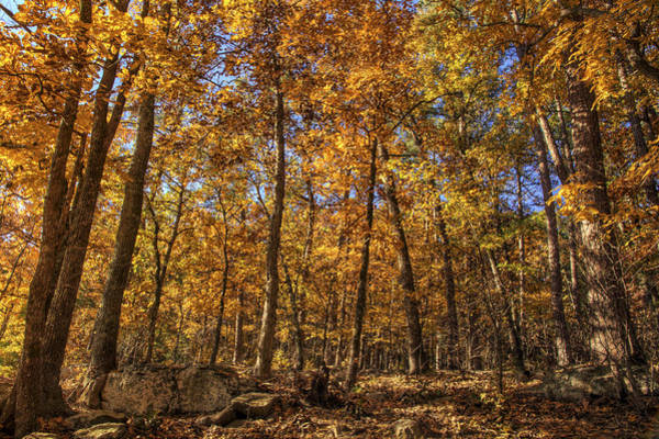 Photograph - Autumn Gold - Fall - Trees by Jason Politte
