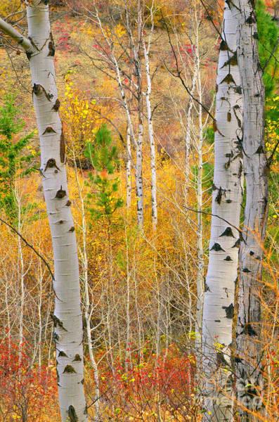 Photograph - Autumn Golds by Tara Turner