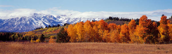 Thicket Photograph - Autumn Grand Teton National Park Wy by Panoramic Images