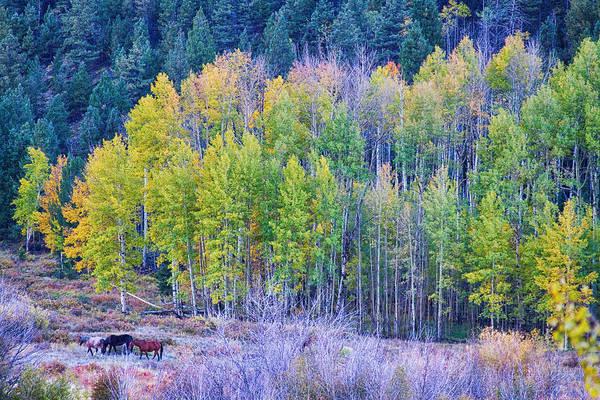 Photograph - Autumn Grazing Horses Bonanza by James BO Insogna