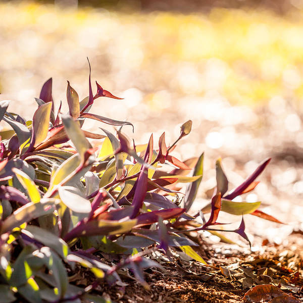 Photograph - Autumn Groundcover by Melinda Ledsome