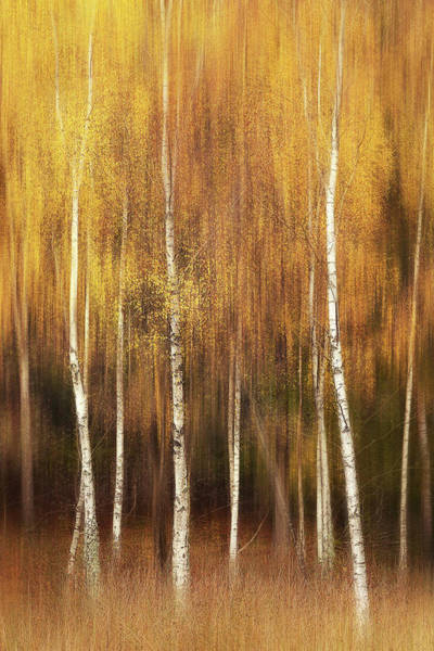 Wall Art - Photograph - Autumn by Gustav Davidsson