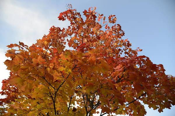 Photograph - Autumn Harmony 1 by Teo SITCHET-KANDA