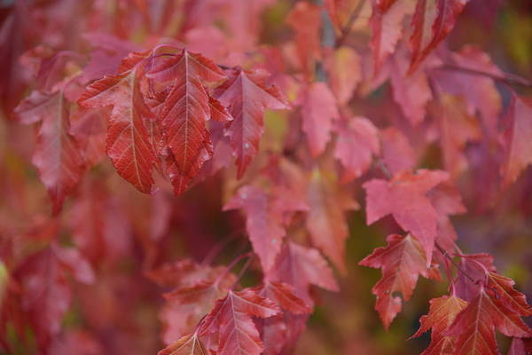 Photograph - Autumn Harmony 2 by Teo SITCHET-KANDA