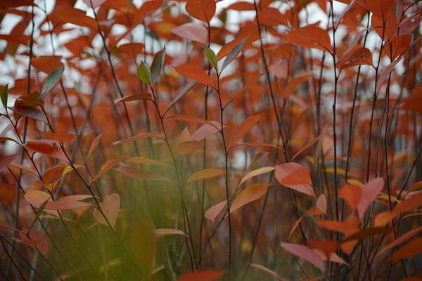 Photograph - Autumn Harmony 3 by Teo SITCHET-KANDA