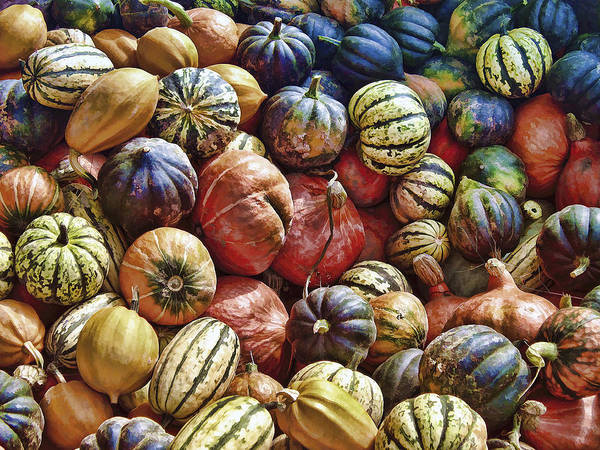 Acorn Squash Photograph - Autumn Harvest by Daniel Hagerman